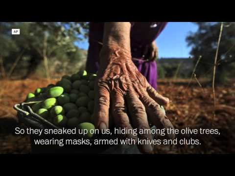 In The West Bank, Broken Olive Branches