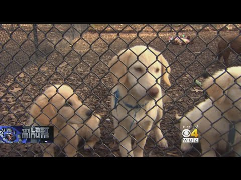 40 Puppies From Tennessee Up For Adoption In Dedham