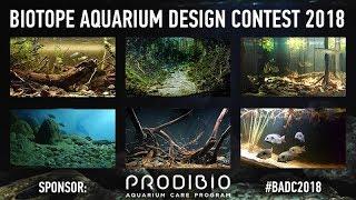 Смотрим все работы конкурса биотопных аквариумов 2018