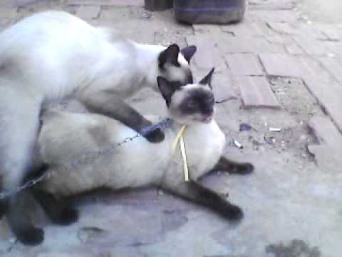 Gatos Flagrados Fazendo Amor Youtube