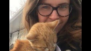 Дрожавший от холода котёнок прыгнул женщине прямо на руки и переехал в собственный дом