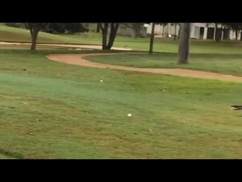 Bird bounces golf ball on the cart path!