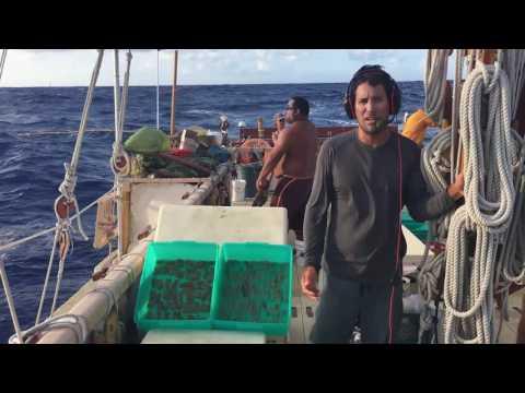 Hōkūleʻa Nav Report   Mar 26, 2017: Marquesas Day 20, ʻŌlelo Hawaiʻi