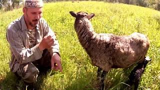 Нежданчик от овечки - киндер-сюрприз! :)