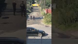На улице Ленина пристрелили собаку 18+