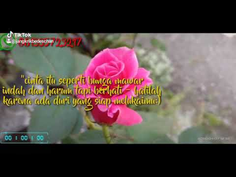Story Wa 30 Detik Kata Kata Bijak Bunga Mawar Youtube