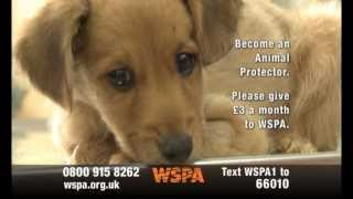 WSPA TV advert