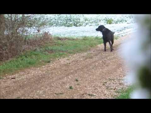 Hunde erziehen ohne Worte Teil 3 , dog training without words Part 3