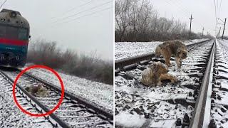 Dog protects injured dog stuck on train tracks; Best man catches friend's cheating wife- Compilation