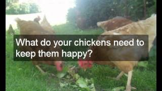 Really Easy Chicken Coop Plans | Design Choice Of Easy Chicken Coop Plans | Detailed Easy To Follow