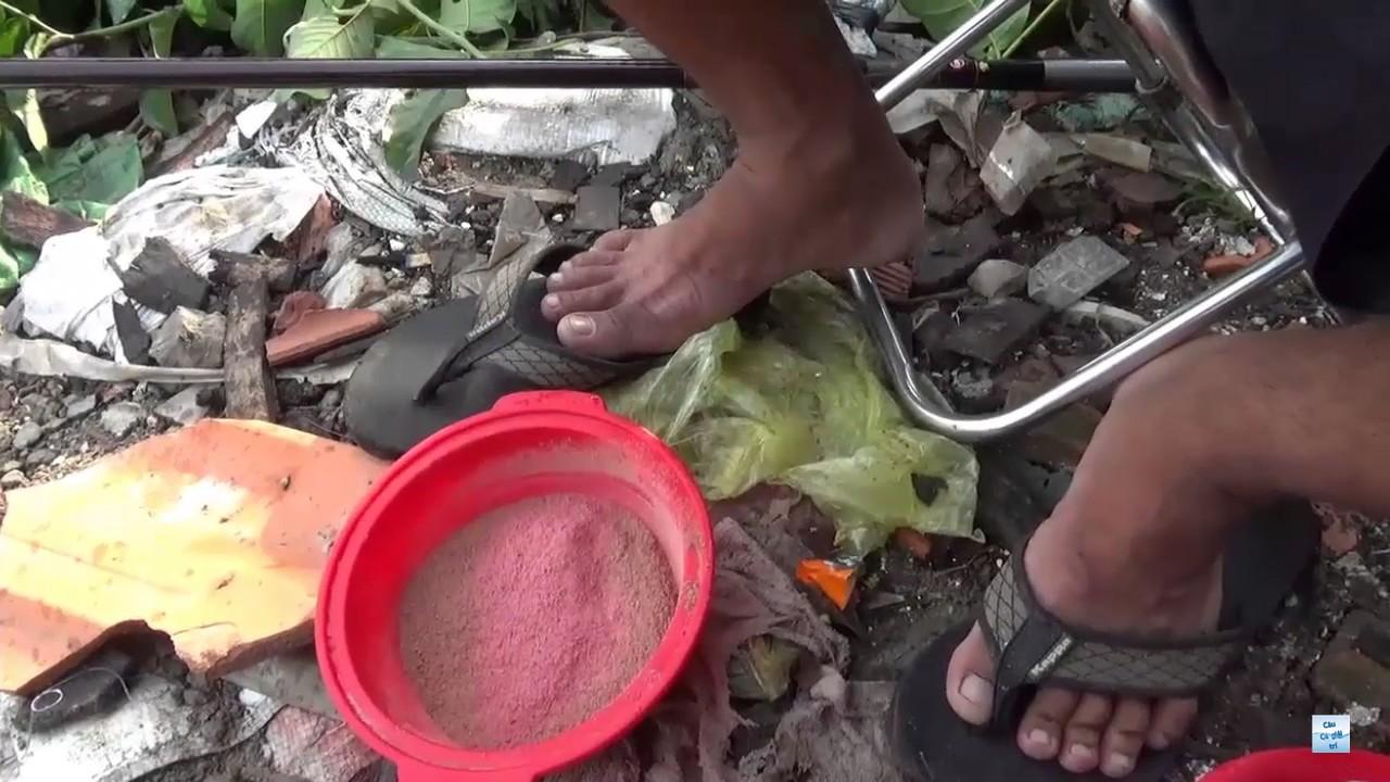 Câu cá giải trí – cách làm mồi câu cá chép đơn giản mà hiệu quả