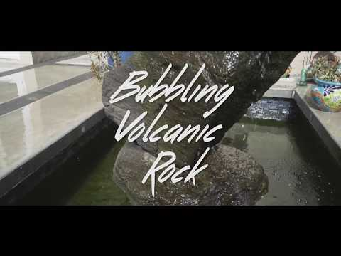 Videos - Bellas Aquatic Gardens | Miami's Premier Pond