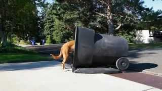 Bad Dog Breath!+ How To Train Puppies,how To Crate Train,dog Training Collar,toilet Training A Puppy