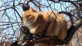 12+ #Koshlandia, Идет охота на мышей,  идет охота... The cat hunts the mouse