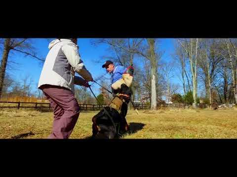 Cody Tallent Seminar   Decoy Training   Off Leash K9 Training