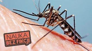 Dlaczego niektórych komary kąsają częściej? | Nauka BEZ fikcji #39