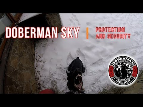 Doberman Sky. Protection and security