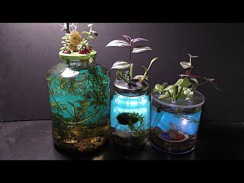 Mason Jar Aquarium Garden DIY