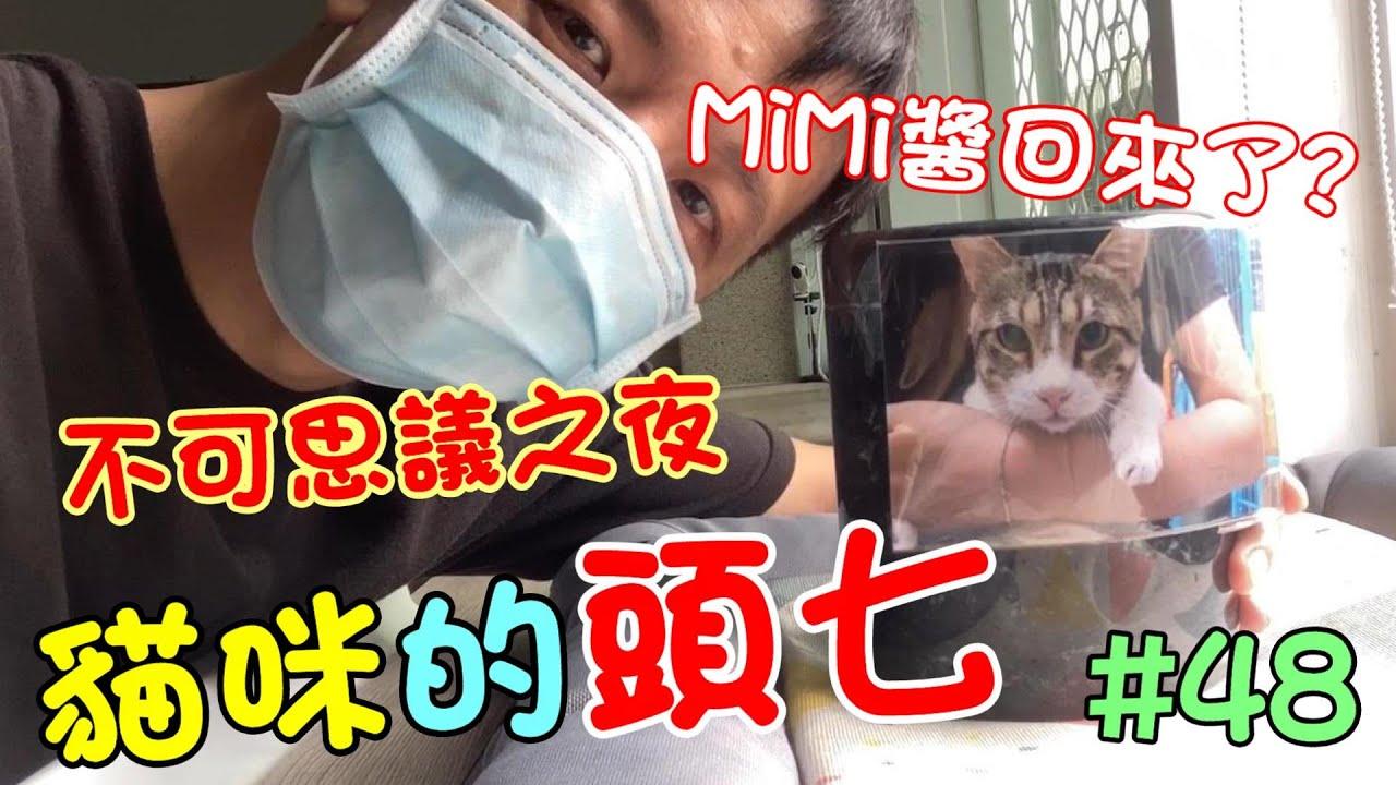 「貓咪的頭七」MiMi醬回來了?不可思議的夜晚 Cat story #48