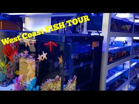 Took a Plane to California to see EXOTIC FISH * 7 SEAS TROPICAL FISH STORE TOUR*