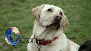 the-dogs-trained-to-spot-cancer-bbc-news