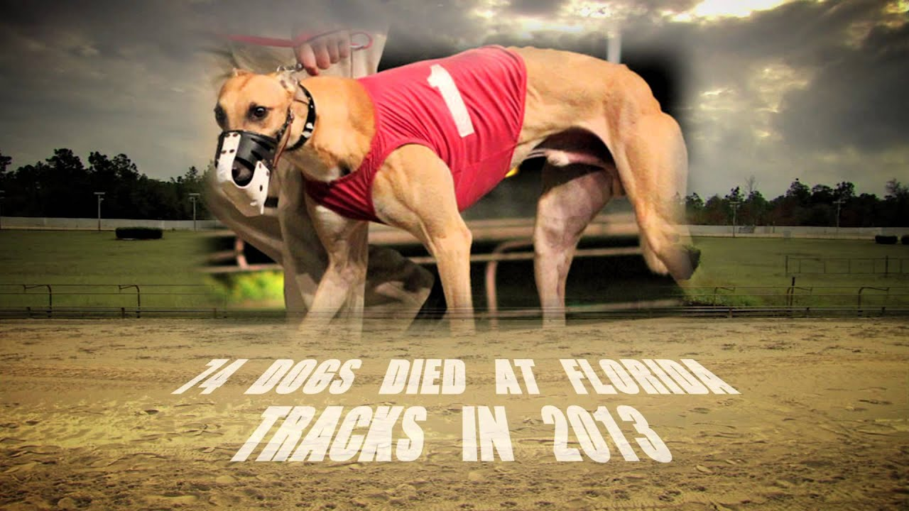 The History Of Greyhound Racing In