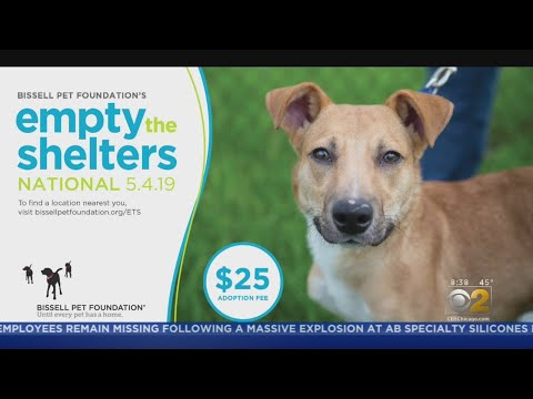 Adopt A Pet Today With 'Empty The Shelters' In The Chicago Area