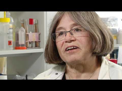 Model Organisms - Yeast - Professor Rhona Borts (Full Interview)