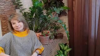 Свитера, джемпера, пуловеры , связанные крючком. Коллекция модных уловок 2