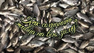 Как сохранить живца для зимней рыбалке, на всю зиму.