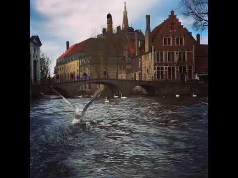 Gondala Trip & Swans In Bruges Belgium 2018