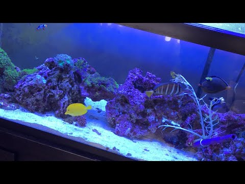 Saltwater tank update: phosphate: green hair algae: nitrates: ich and marine velvet