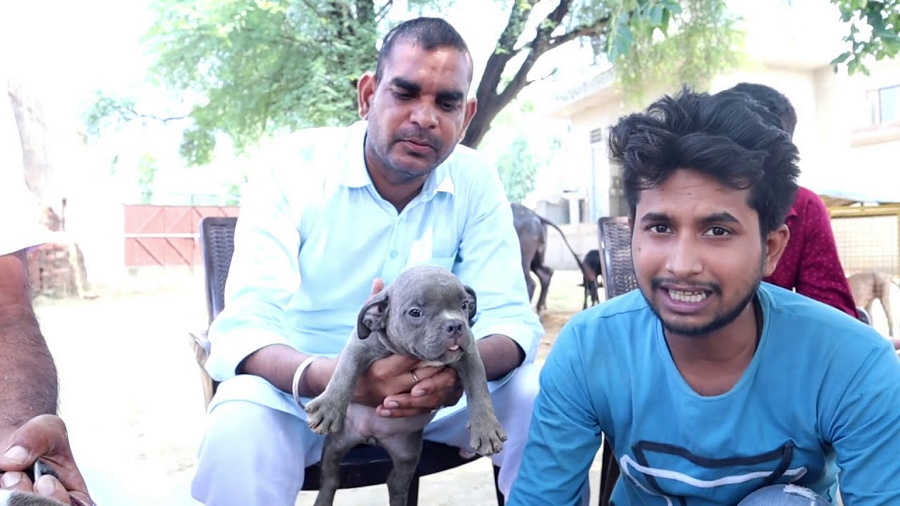 Cheapest Dog Market In In Delhi Pitbull American Bully Youtube