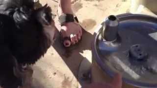 Pet Friendly Austin Lake Lady Bird Dog Fountains In Zilker Park