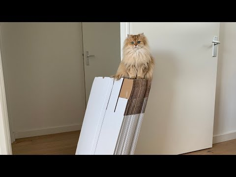 MOVING WITH CATS - When The Boxes Arrive