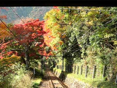 叡山ケーブル 紅葉の車窓 Kyoto - colored leaves at Mt. Hiei cable car