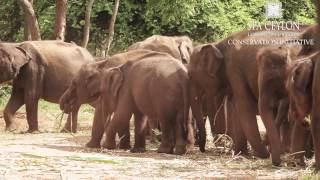 Save the Majestic Ceylon Elephant - SPA CEYLON Conservation Initiative