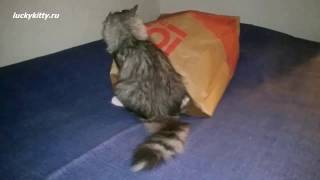 Уникальная игрушка-тренажер для кошек