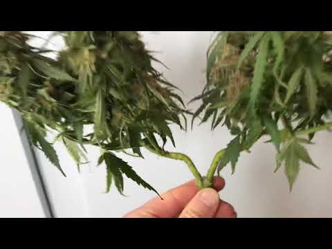 Topping and training is good for healthy autos