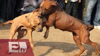 Denuncian peleas de perros en Aguascalientes / Kimberly Armengol