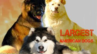 Five Biggest American Dogs