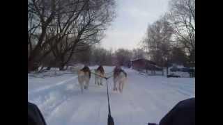 Siberian Husky. Ice Blizzard Kennel. Winter Training. 2 Part
