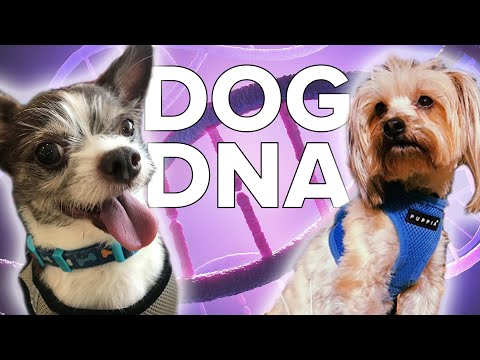 We DNA Tested Our Dogs