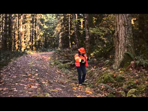 Find Your Path: Forest Engineer