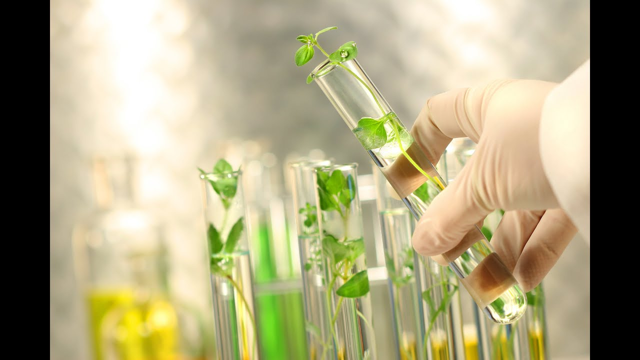chemistry and biotechnology The george whitesides research group in the department of chemistry and chemical biology at harvard university, cambridge, massachusetts, usa high impact innovation and imagination.