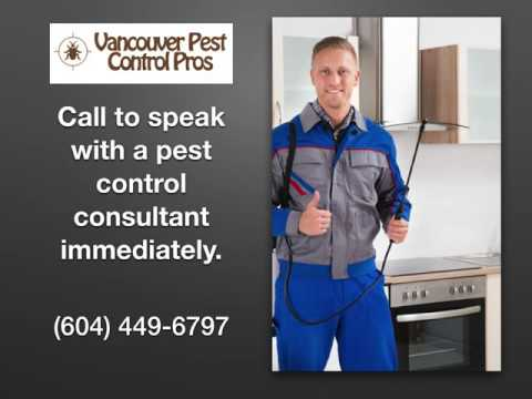 Bed Bugs Exterminator in Vancouver WA - Vancouver Pest Control Pros