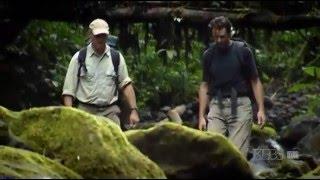 В Диких Джунглях 1 / Jungle