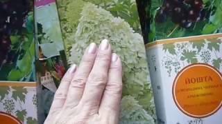 Приобретаем посадочный материал луковичных,корневищных многолетних цветов и кустарников(, 2017-02-15T09:09:36.000Z)