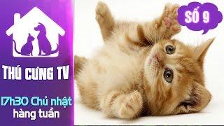 Thú cưng TV - Số 9 (P2) – Cách chăm sóc mèo con | YOUTV