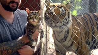 Repeat youtube video BUB MEETS TIGERS